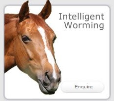 Intelligent Worming